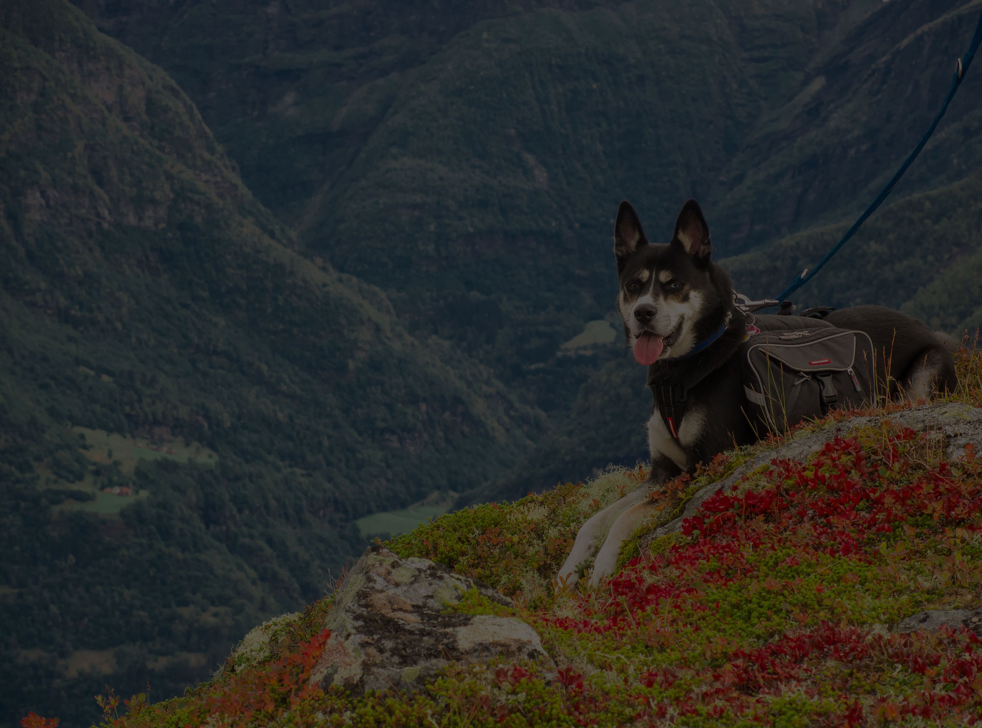 dog hiking on mountains