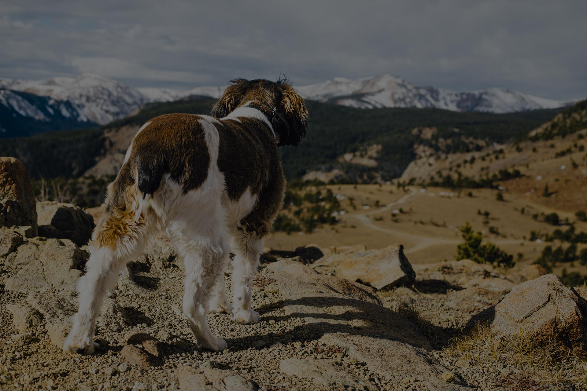Happy dog exploring the mountains in Colorado