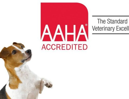 The Benefits of Taking Your Pet to an AAHA-Accredited Veterinary Hospital